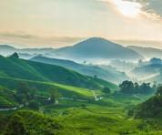 茶之源:遇见西双版纳,遇见普洱茶
